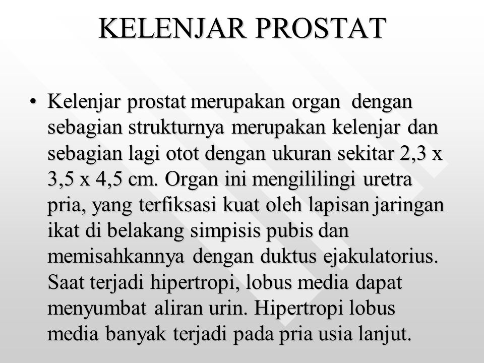 KELENJAR PROSTAT