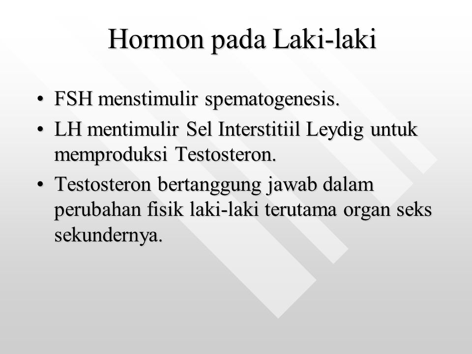 Hormon pada Laki-laki FSH menstimulir spematogenesis.