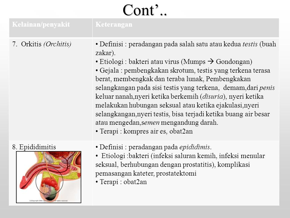 Cont'.. Kelainan/penyakit Keterangan 7. Orkitis (Orchitis)