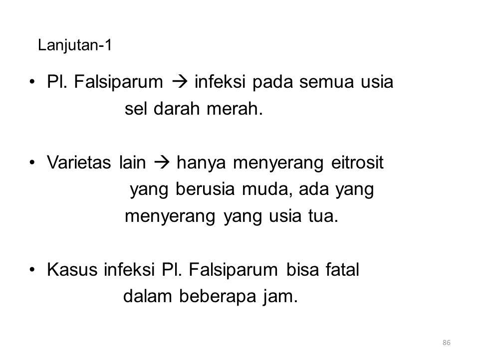 Pl. Falsiparum  infeksi pada semua usia sel darah merah.