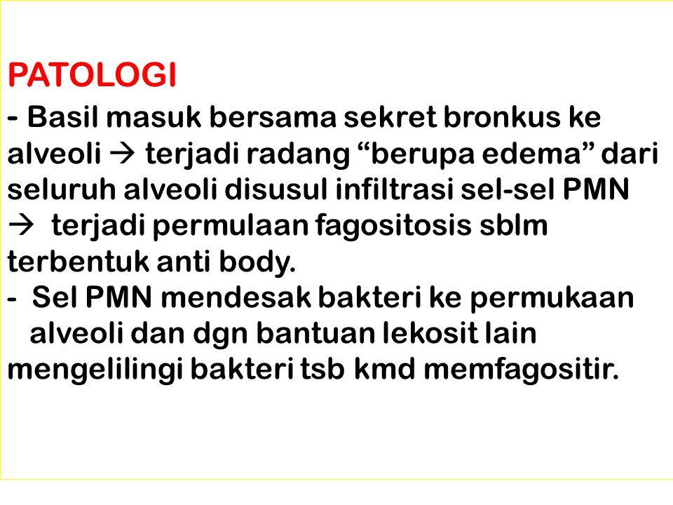 PATOLOGI - Basil masuk bersama sekret bronkus ke alveoli  terjadi radang berupa edema dari seluruh alveoli disusul infiltrasi sel-sel PMN  terjadi permulaan fagositosis sblm terbentuk anti body.