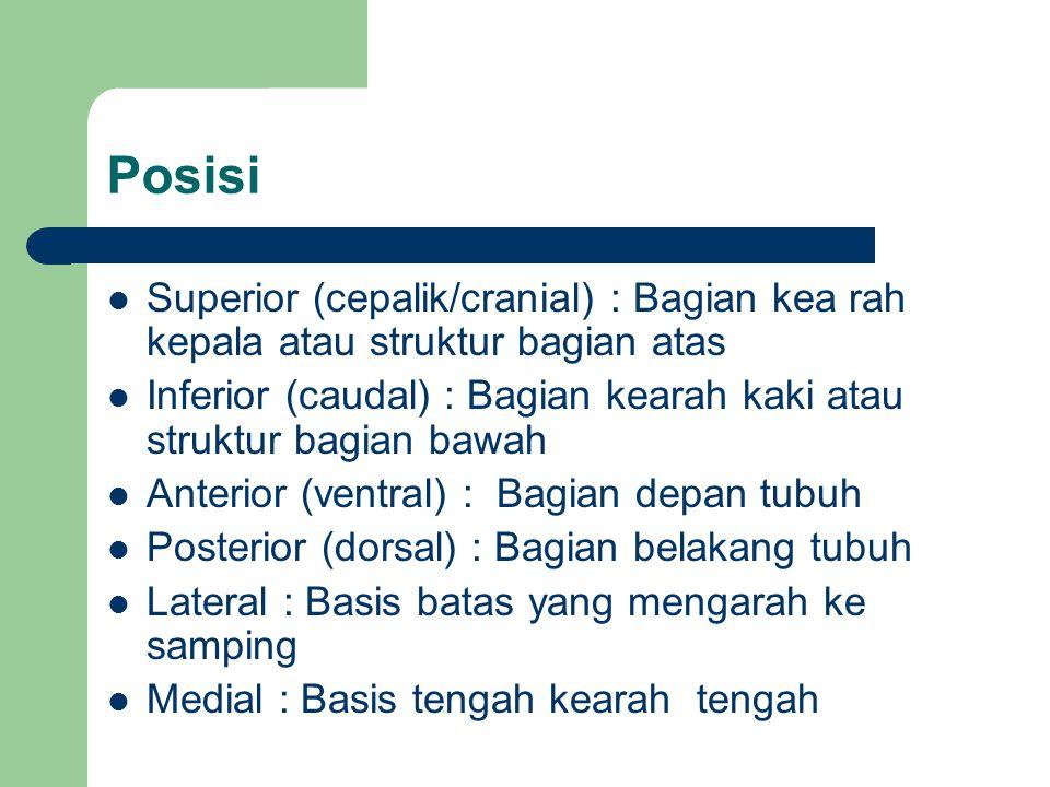 Posisi Superior (cepalik/cranial) : Bagian kea rah kepala atau struktur bagian atas.