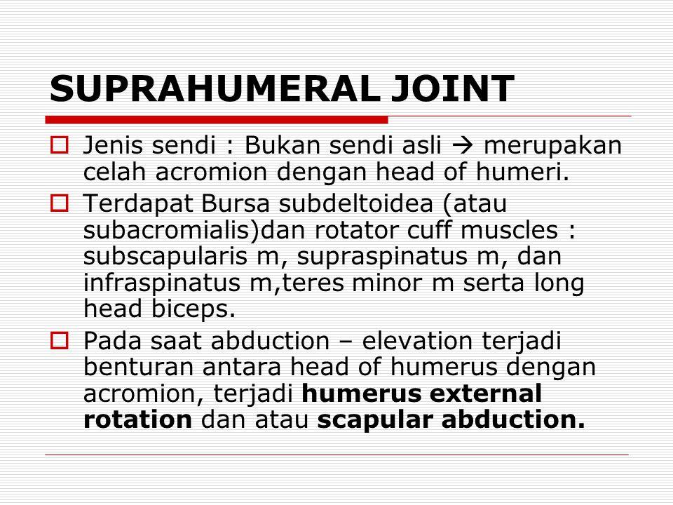 SUPRAHUMERAL JOINT Jenis sendi : Bukan sendi asli  merupakan celah acromion dengan head of humeri.