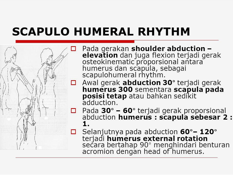 SCAPULO HUMERAL RHYTHM