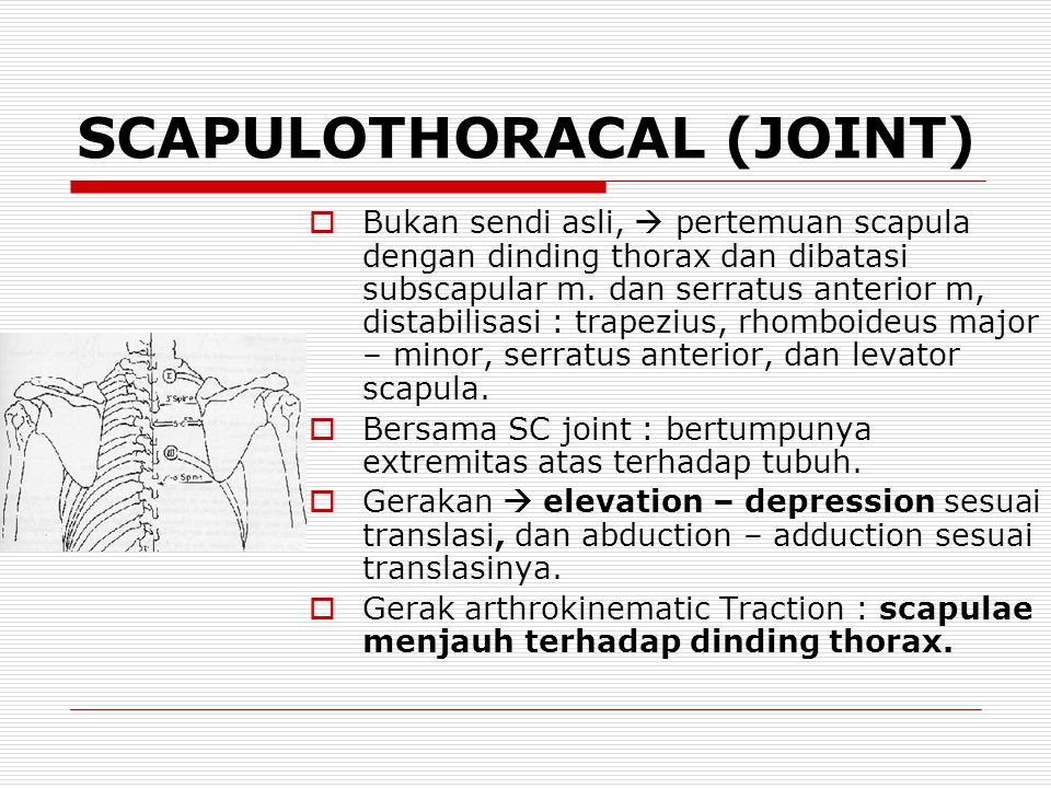 SCAPULOTHORACAL (JOINT)