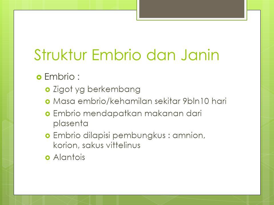 Struktur Embrio dan Janin