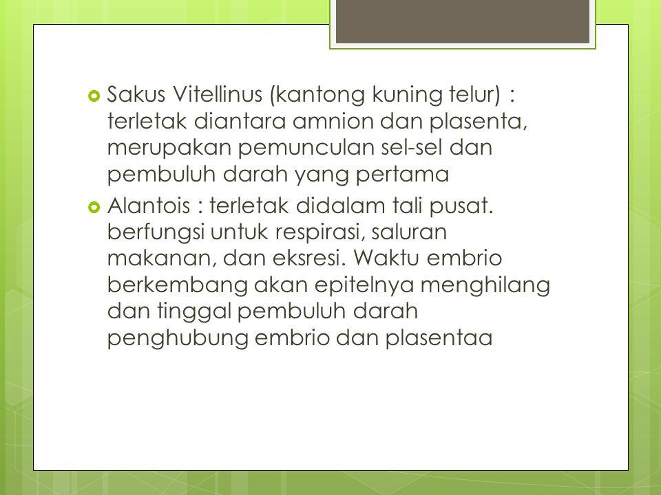 Sakus Vitellinus (kantong kuning telur) : terletak diantara amnion dan plasenta, merupakan pemunculan sel-sel dan pembuluh darah yang pertama