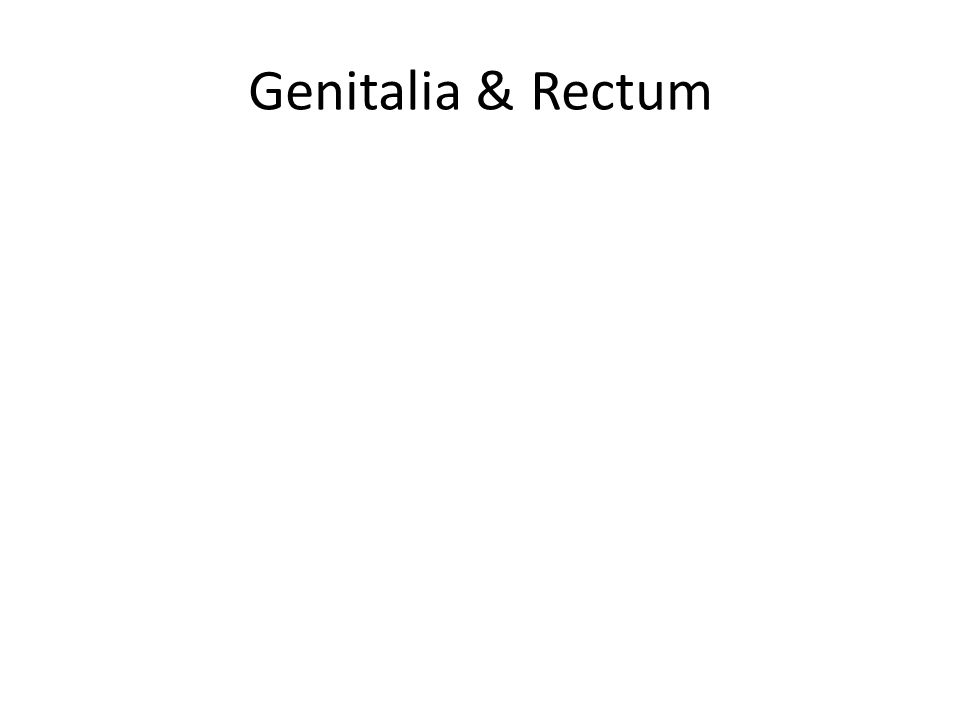 Genitalia & Rectum