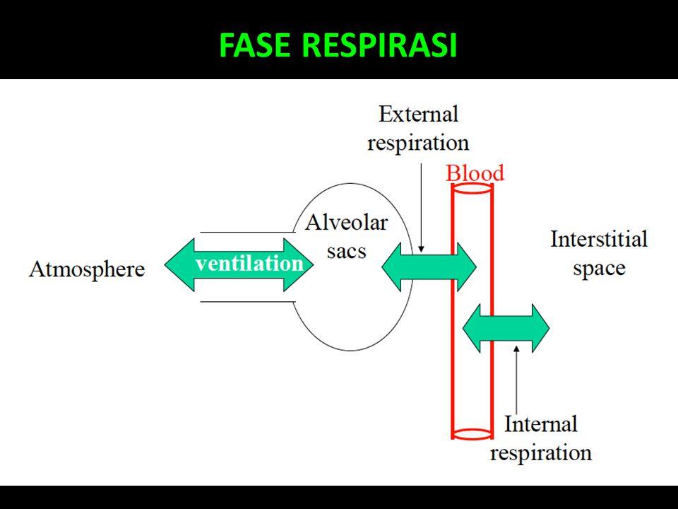 FASE RESPIRASI