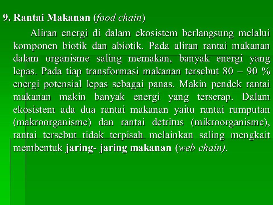 9. Rantai Makanan (food chain)