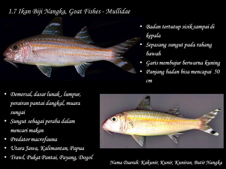 1.7 Ikan Biji Nangka, Goat Fishes - Mullidae
