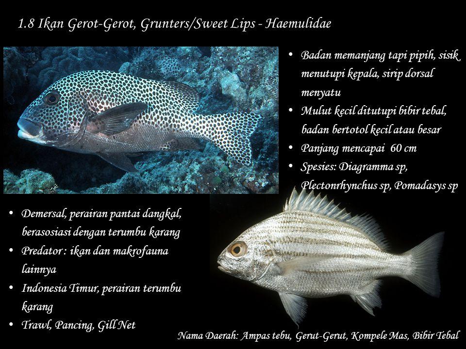 1.8 Ikan Gerot-Gerot, Grunters/Sweet Lips - Haemulidae