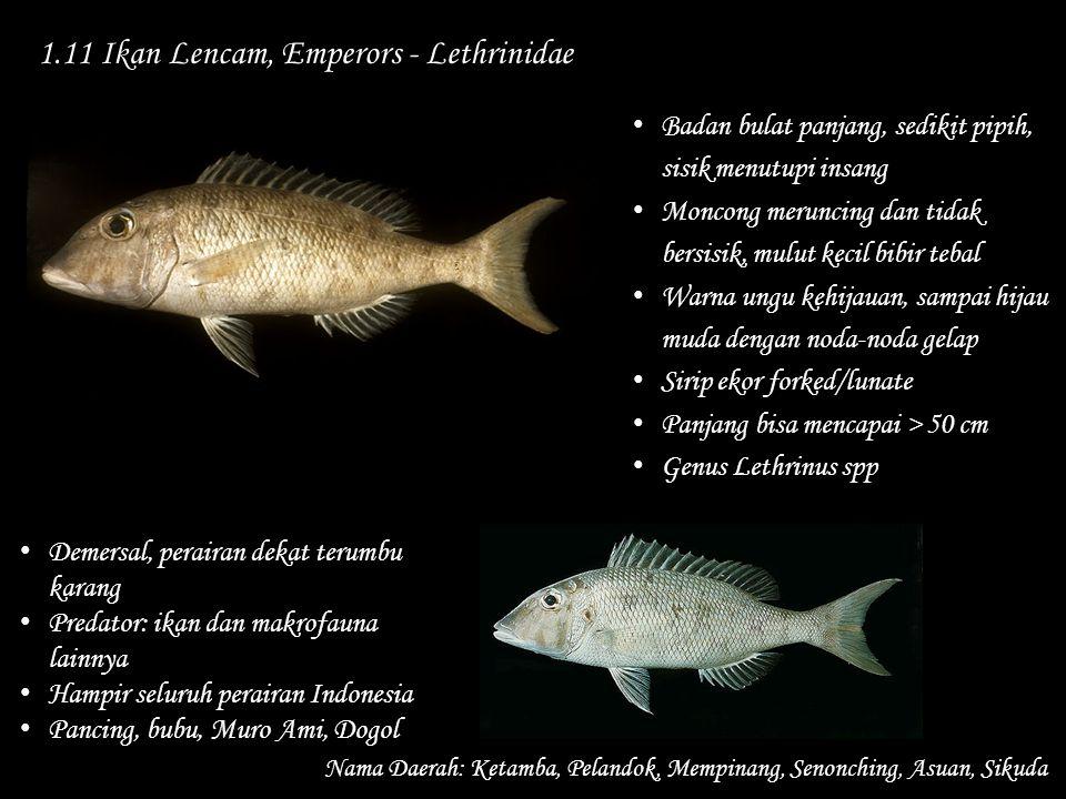 1.11 Ikan Lencam, Emperors - Lethrinidae