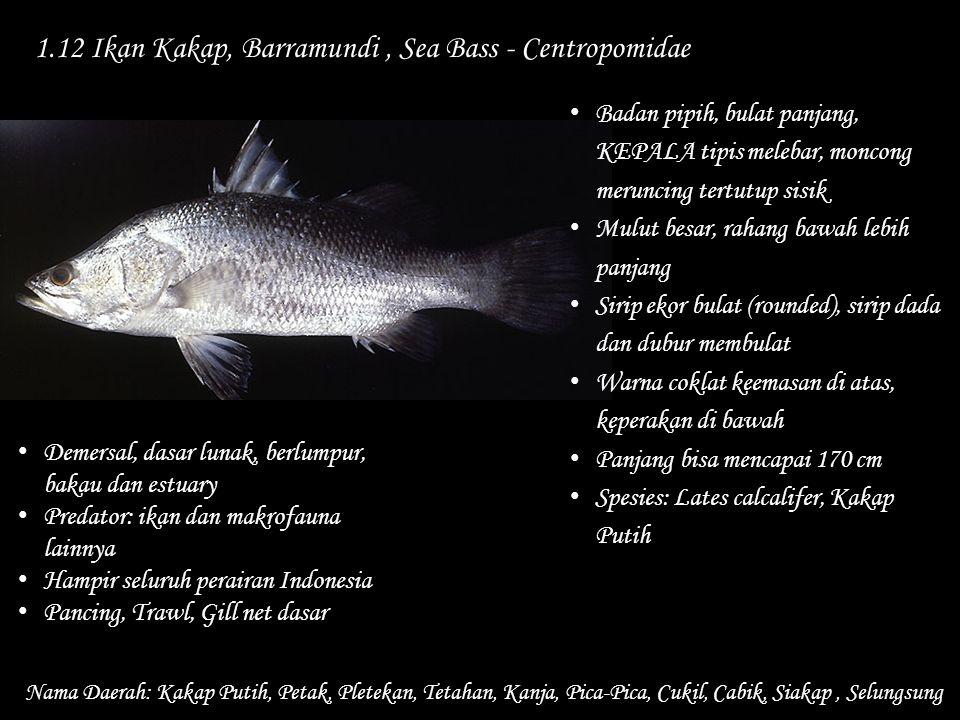 1.12 Ikan Kakap, Barramundi , Sea Bass - Centropomidae
