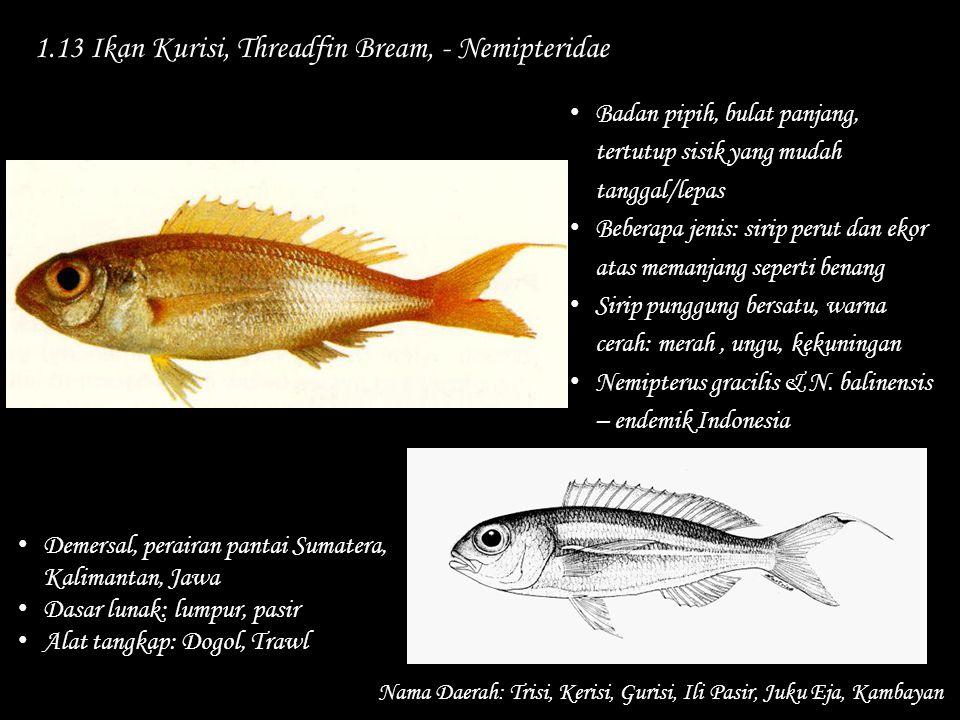 1.13 Ikan Kurisi, Threadfin Bream, - Nemipteridae