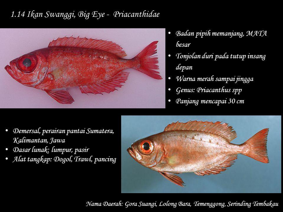 1.14 Ikan Swanggi, Big Eye - Priacanthidae