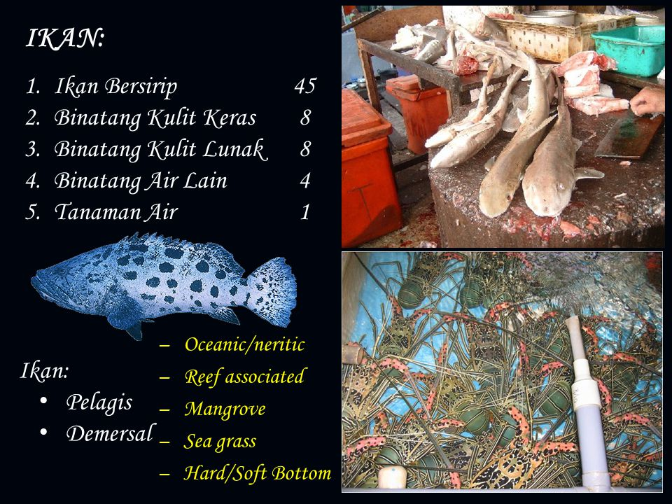 IKAN: Ikan Bersirip 45 Binatang Kulit Keras 8 Binatang Kulit Lunak 8