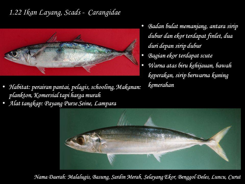 1.22 Ikan Layang, Scads - Carangidae