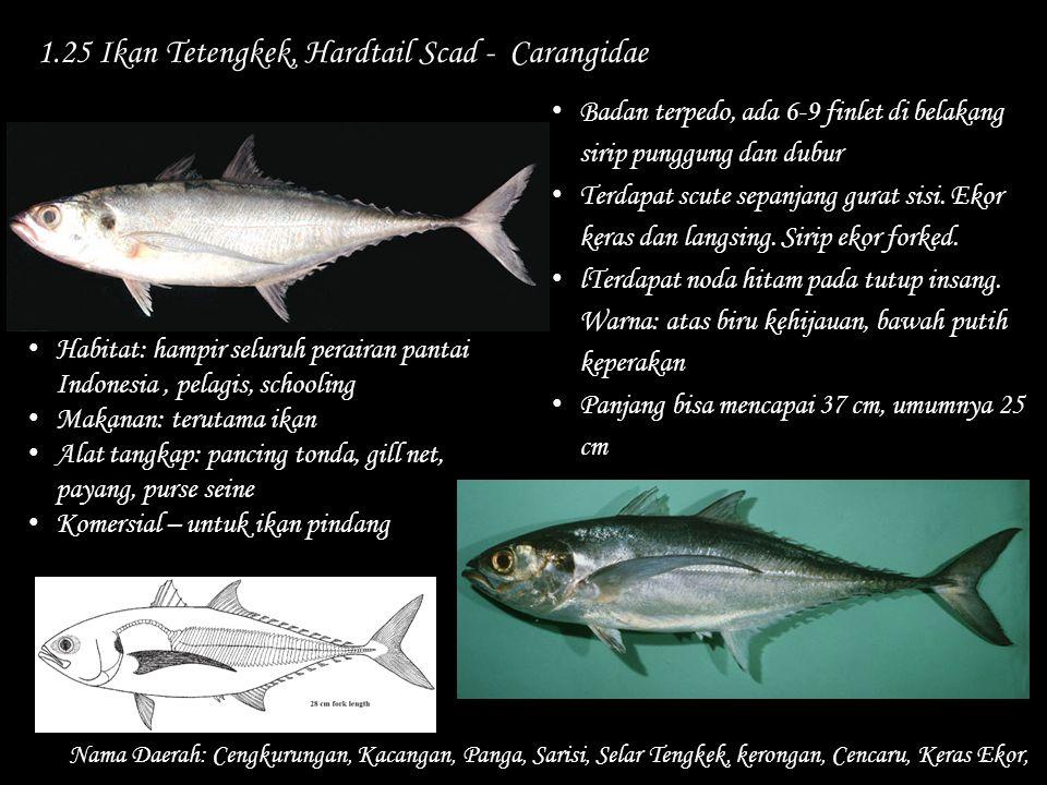 1.25 Ikan Tetengkek, Hardtail Scad - Carangidae
