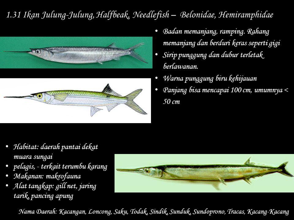 1.31 Ikan Julung-Julung, Halfbeak, Needlefish – Belonidae, Hemiramphidae