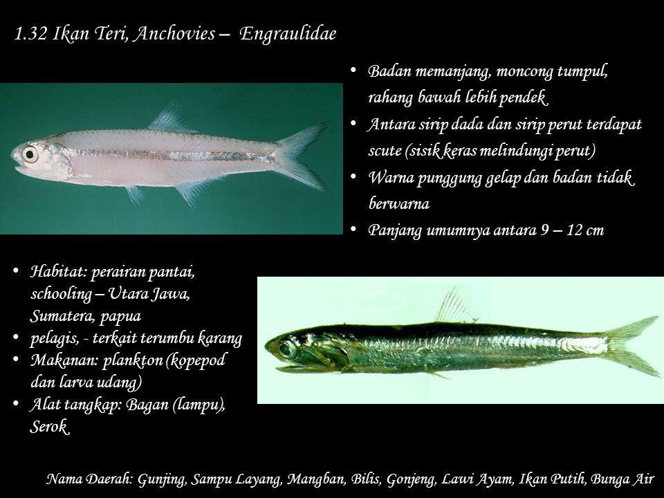 1.32 Ikan Teri, Anchovies – Engraulidae