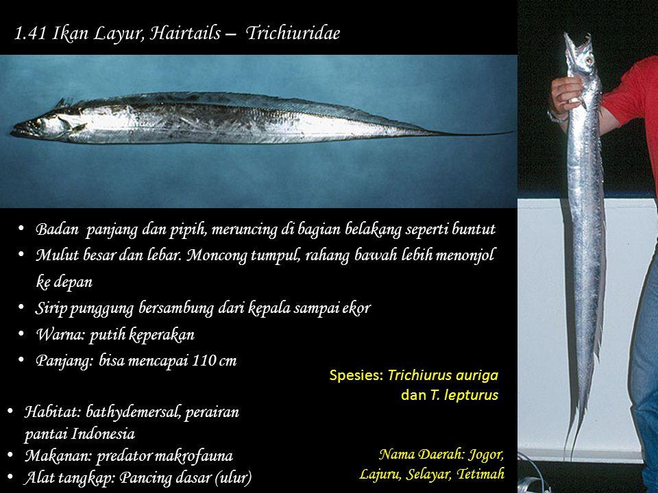 1.41 Ikan Layur, Hairtails – Trichiuridae