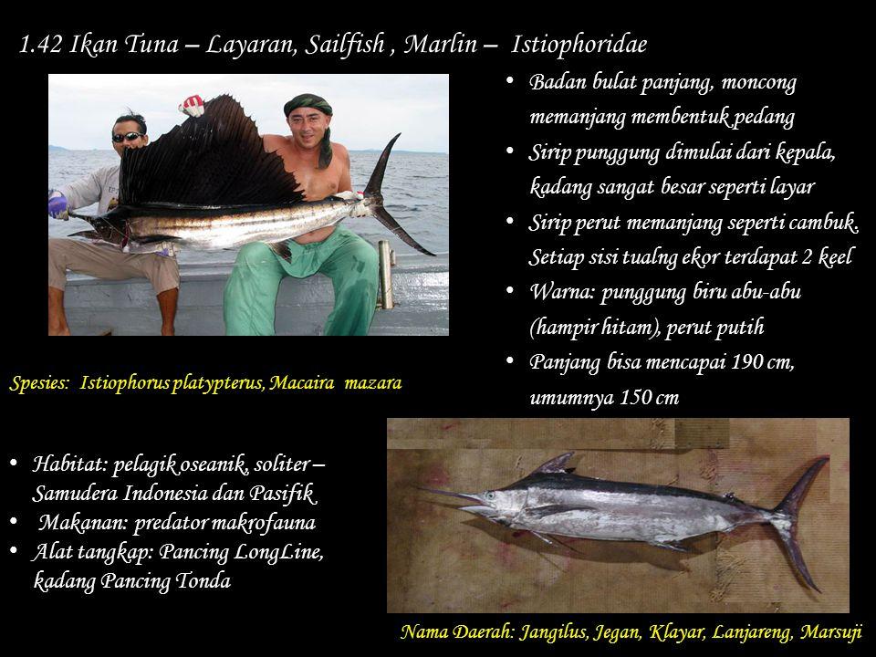 1.42 Ikan Tuna – Layaran, Sailfish , Marlin – Istiophoridae