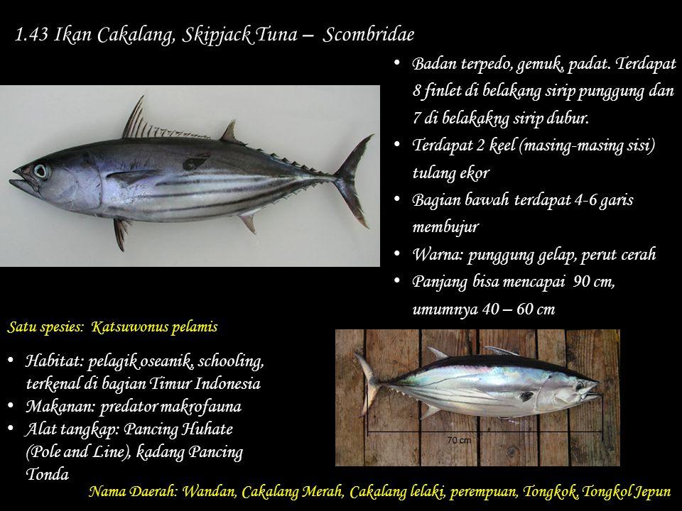 1.43 Ikan Cakalang, Skipjack Tuna – Scombridae