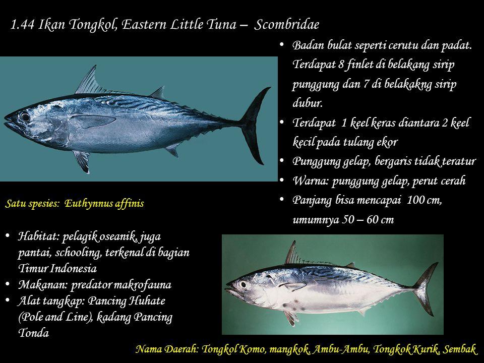 1.44 Ikan Tongkol, Eastern Little Tuna – Scombridae
