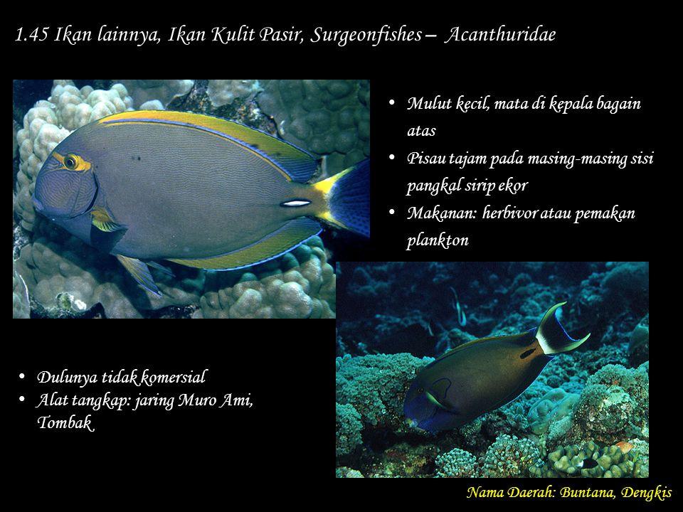1.45 Ikan lainnya, Ikan Kulit Pasir, Surgeonfishes – Acanthuridae