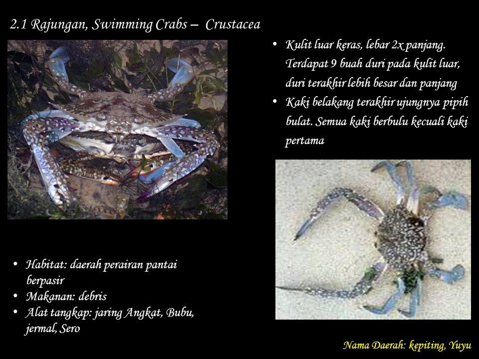 2.1 Rajungan, Swimming Crabs – Crustacea