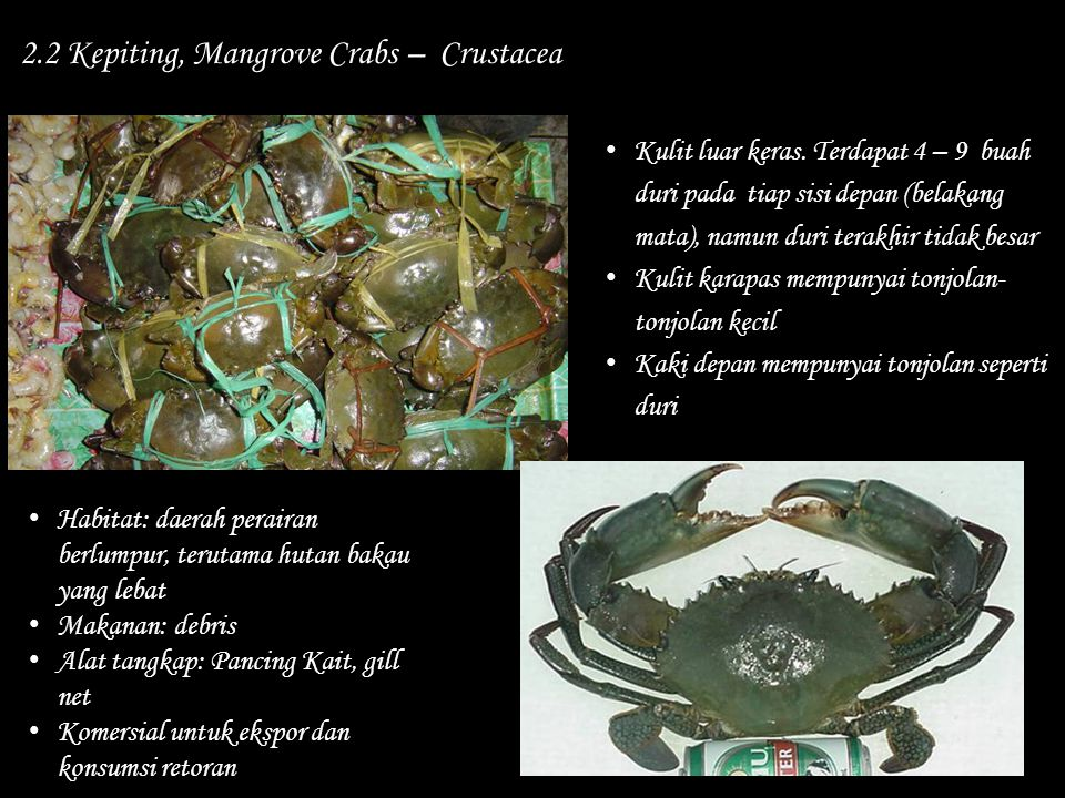 2.2 Kepiting, Mangrove Crabs – Crustacea
