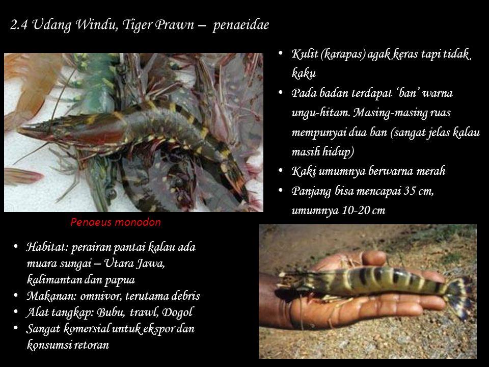 2.4 Udang Windu, Tiger Prawn – penaeidae