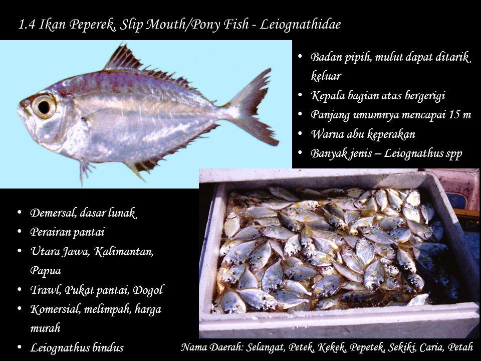 1.4 Ikan Peperek, Slip Mouth/Pony Fish - Leiognathidae