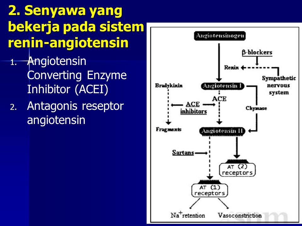 2. Senyawa yang bekerja pada sistem renin-angiotensin