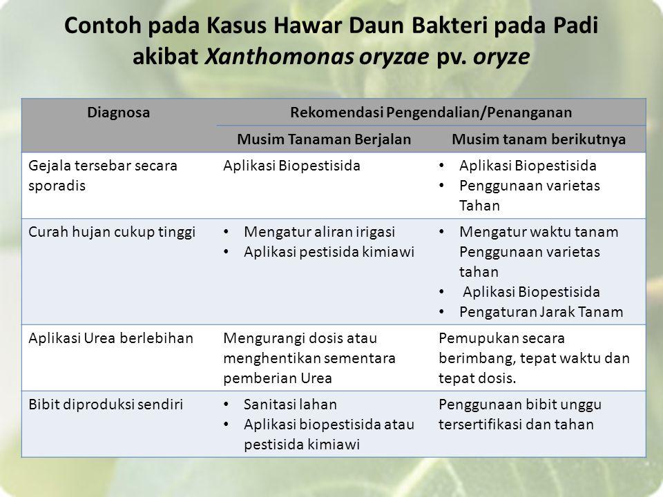 Contoh pada Kasus Hawar Daun Bakteri pada Padi akibat Xanthomonas oryzae pv. oryze