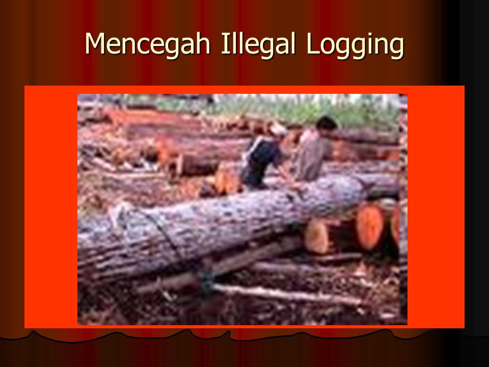 Mencegah Illegal Logging
