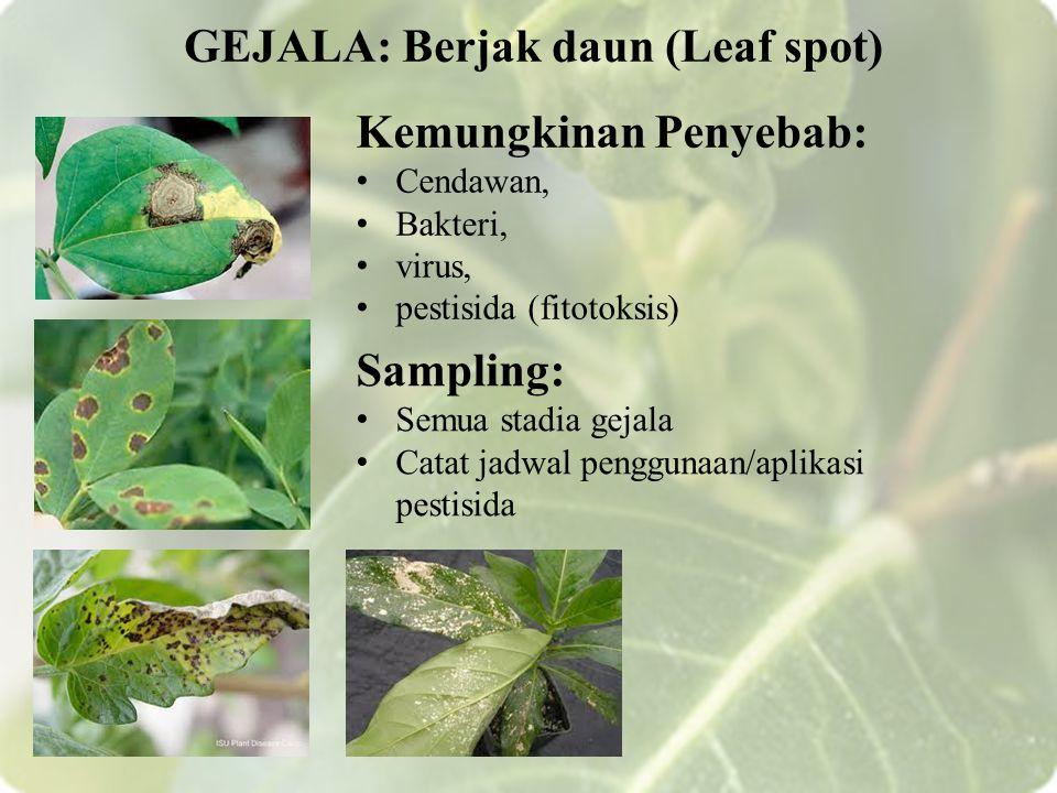 GEJALA: Berjak daun (Leaf spot)