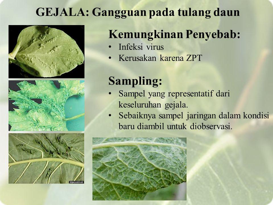 GEJALA: Gangguan pada tulang daun