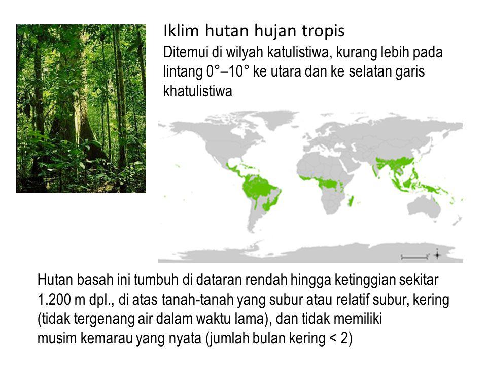 Iklim hutan hujan tropis