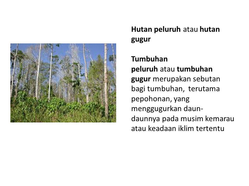 Hutan peluruh atau hutan gugur