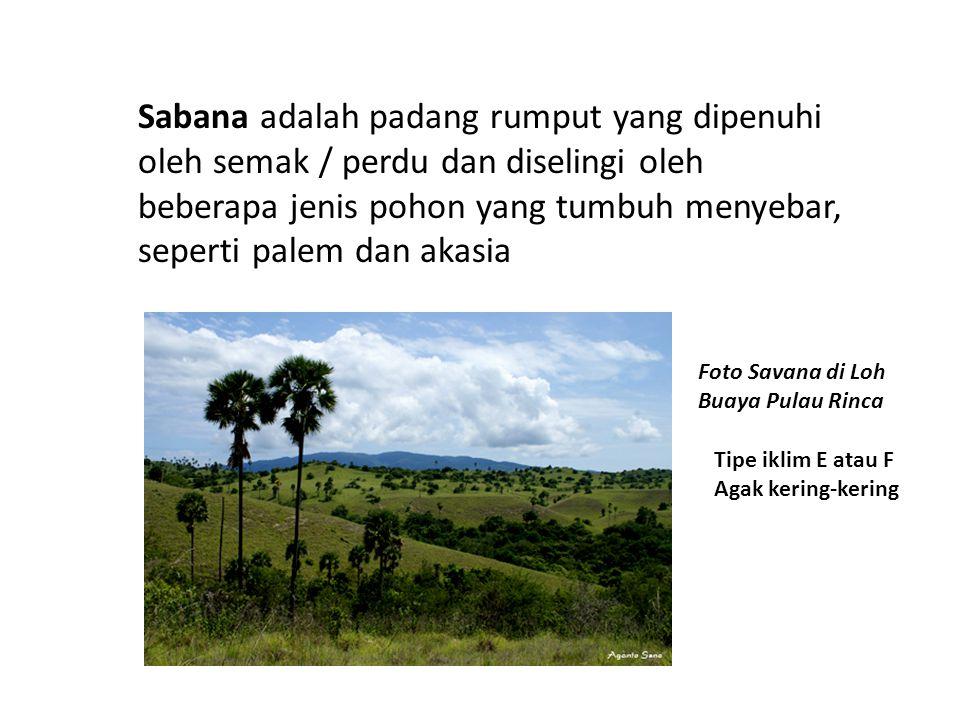 Sabana adalah padang rumput yang dipenuhi oleh semak / perdu dan diselingi oleh beberapa jenis pohon yang tumbuh menyebar, seperti palem dan akasia