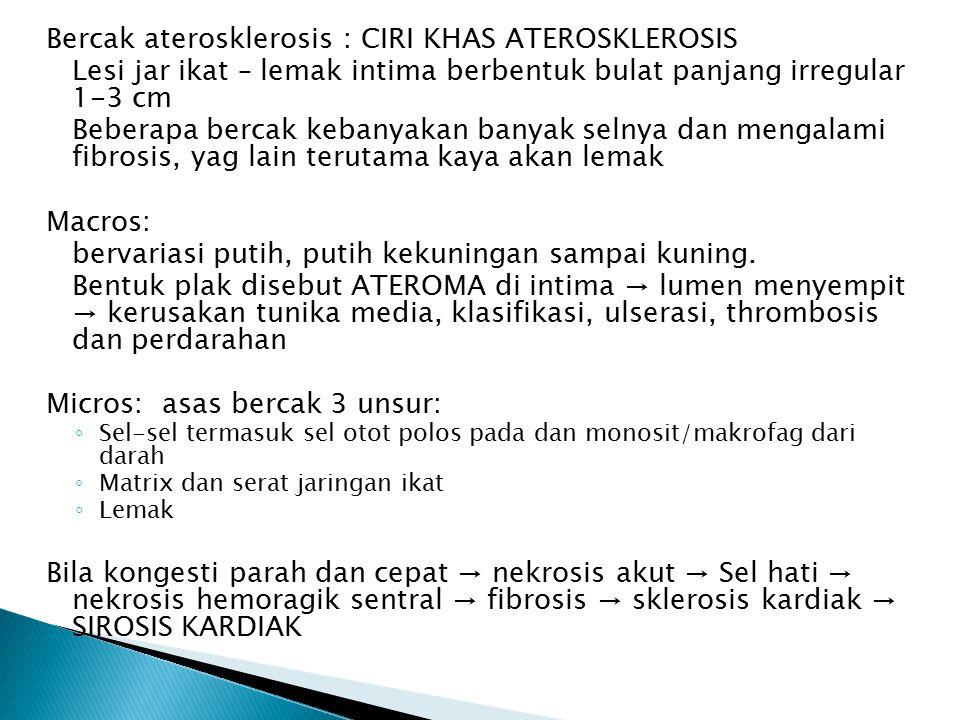 Bercak aterosklerosis : CIRI KHAS ATEROSKLEROSIS