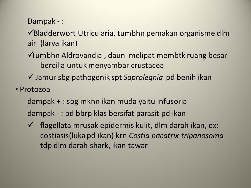 Dampak - : Bladderwort Utricularia, tumbhn pemakan organisme dlm air (larva ikan)