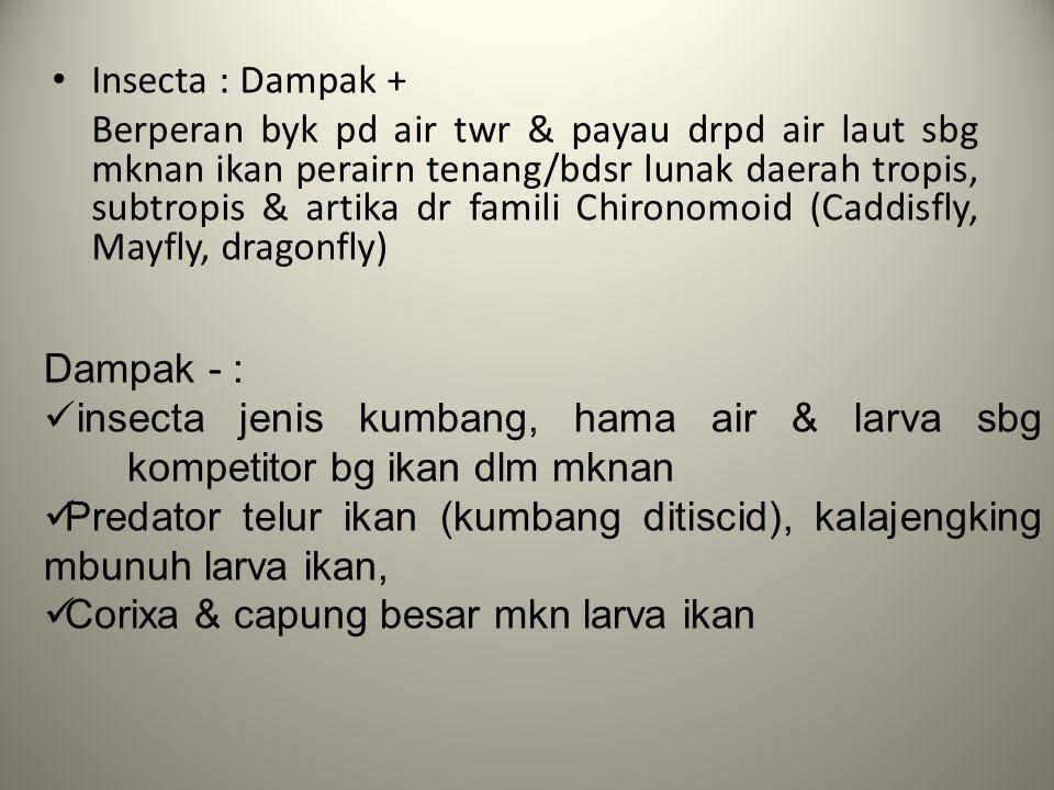 Insecta : Dampak +