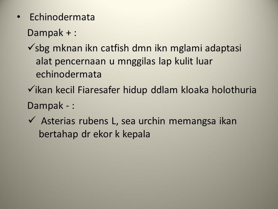 Echinodermata Dampak + : sbg mknan ikn catfish dmn ikn mglami adaptasi alat pencernaan u mnggilas lap kulit luar echinodermata.