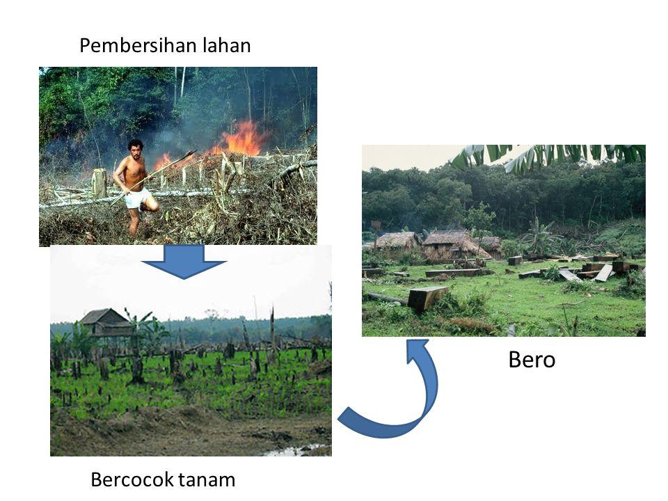 Pembersihan lahan Bero Bercocok tanam