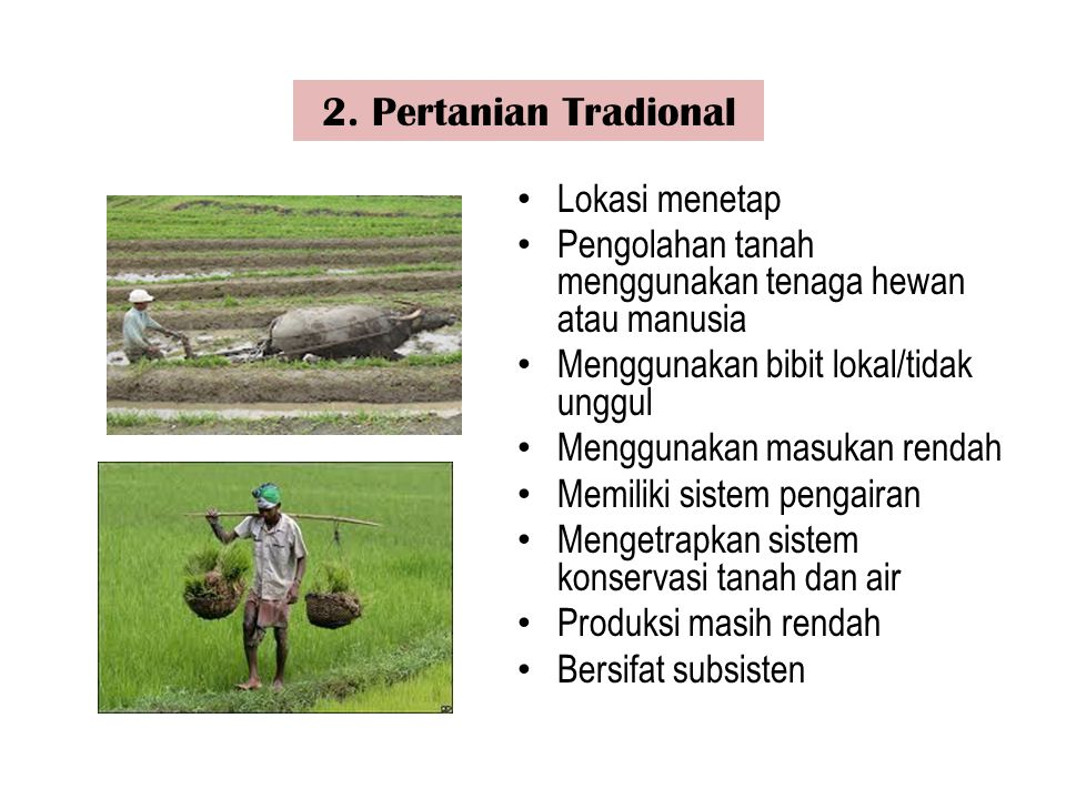 2. Pertanian Tradional Lokasi menetap