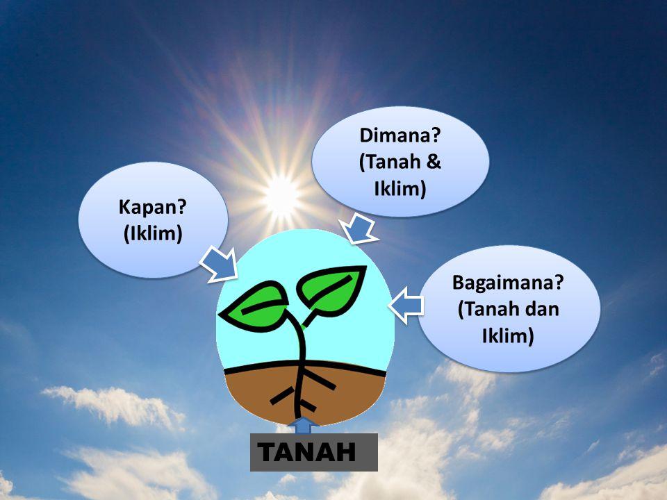 TANAH Dimana (Tanah & Iklim) Kapan (Iklim) Bagaimana