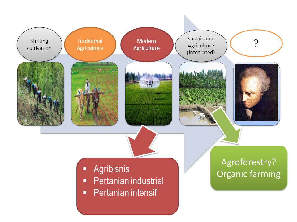 Agroforestry Organic farming Agribisnis Pertanian industrial